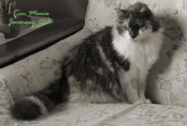 2013_01_19_4034 Gray Green SIGN