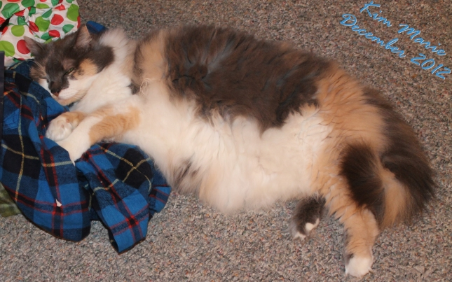 A cat laying on the carpet enjoying a new flannet shirt that was a Christmas present.
