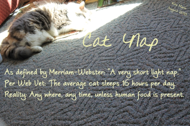 "Cat Nap - As defined by Merriam-Webster: ""A very short light nap."" Per Web Vet: The average cat sleeps 16 hours per day. Reality: Any where, any time, unless food is present."
