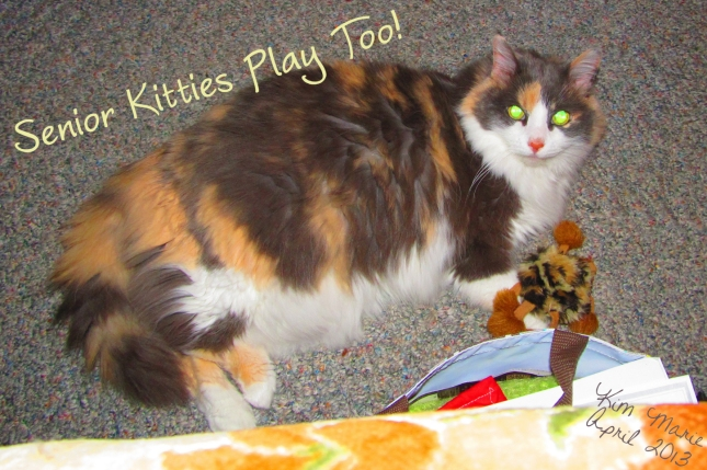"An image of a diluted calico cat (that's the color - there's nothing diluted about her) laying on the floor and playing with a fluffy cat toy. It says, ""Senior Cats Play Too!"""