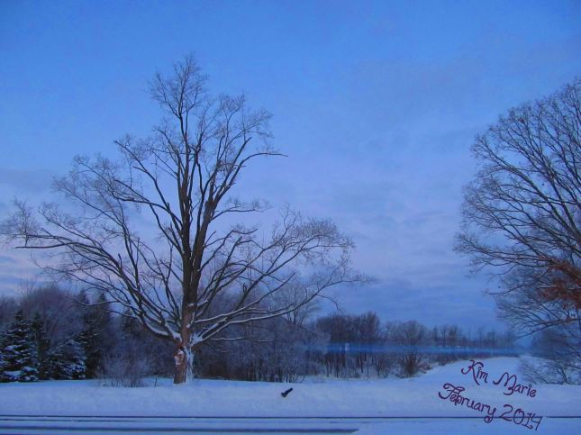 A tree, covered in snow, a field behind it with a thin line of fog running through the field.