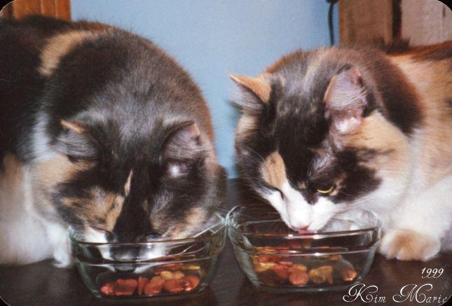 00000714 Daffodil & Daisy Eating 1999