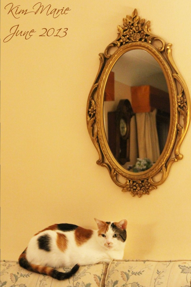 Calico cat on the back of a couch with an ornate mirror behind her.