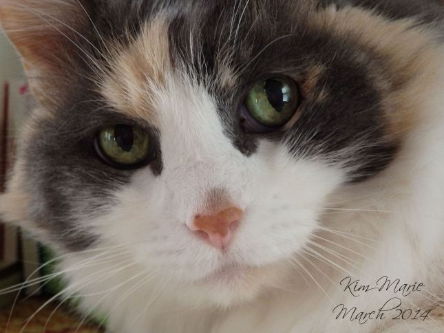 Photo of Daisy kitty with green eyes and gray around her eyes with peach on her cheecks and ears and the rest white fur with a pink nose. Just of her face.