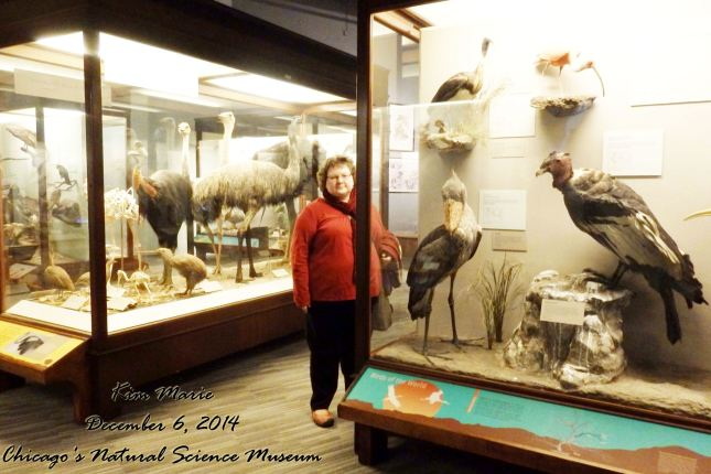 I am standing in the middle of a room of stuffed birds at the Chicago Natural Science Museum.
