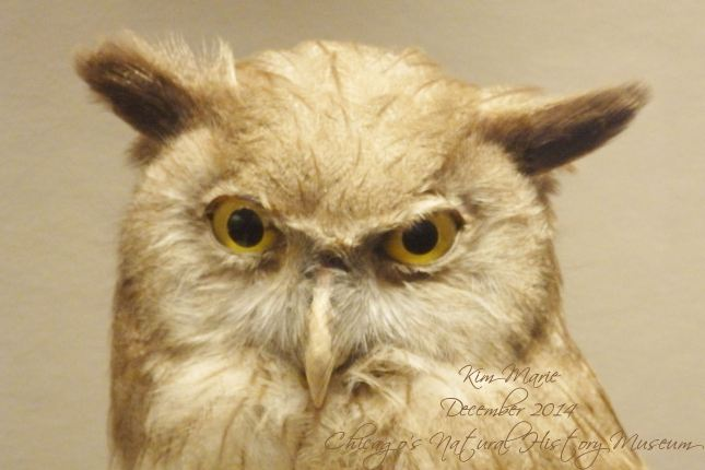 The face of an owl, with golden eyes, ears flat out to the side, and kind of a glare or a question on his face.