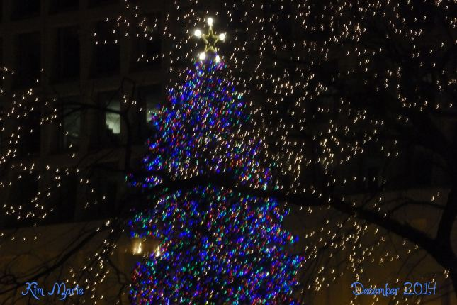 A pine tree, outside at night, lite with blue lights and a white star on top.