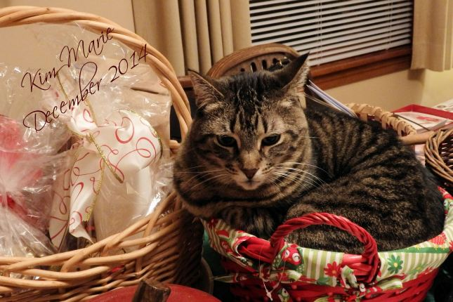 A gray and black tiger kitty curled into a red holiday basket. Seems like a tight fit.