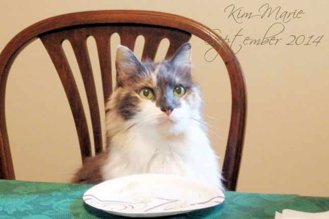 Calico kitty with gray face & nose and some peach with a white chest and cheecks sitting at a table in a chair waiting with an empty plate before her.