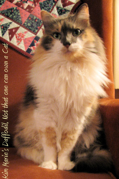 "A diluted calico cat with a white chest and gray and peach on her back and face sits on a mauve chair with a quited head rest. It reads, ""Kim Marei's Daffodil, Not that one can own a Cat."""