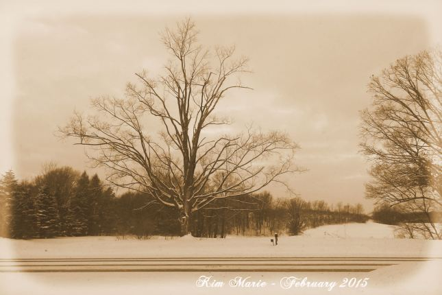 Sepia tone photo of a bare tree in the winter across a snowy road.