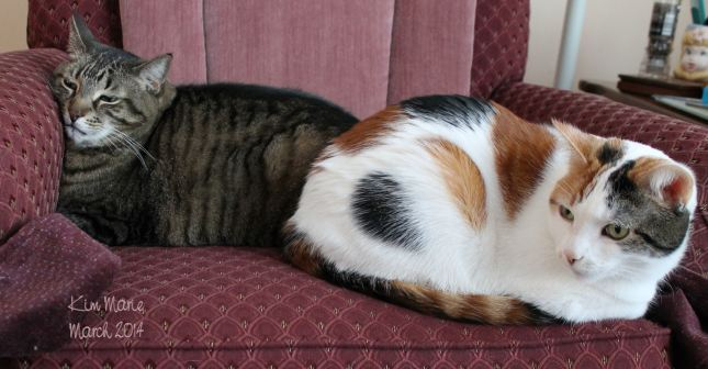 A black tiger cat and a mostly white with some black and orange calico cat sit fanny to fanny on a maroon chair.