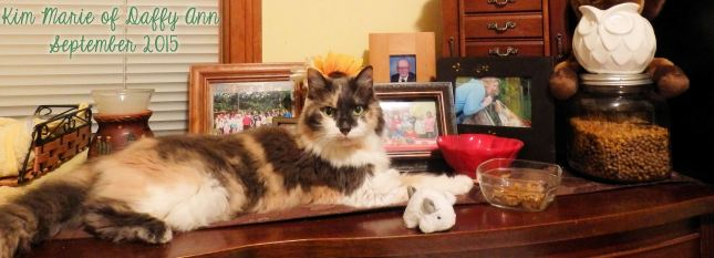Diluted calico kitty on a cherry dresser with photos and a jewelry box behind her. She is laying on her tummy with her back gray food out a bit and her eyes looking at us intently.
