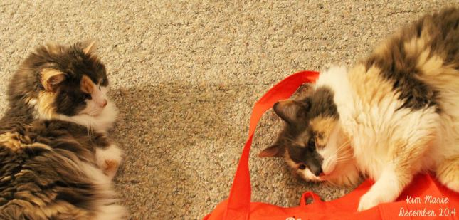 Daisy and Daffodil, diluted calico kitties with white bellies, lounging on the floor and playing with a Target re-usable shopping bag.