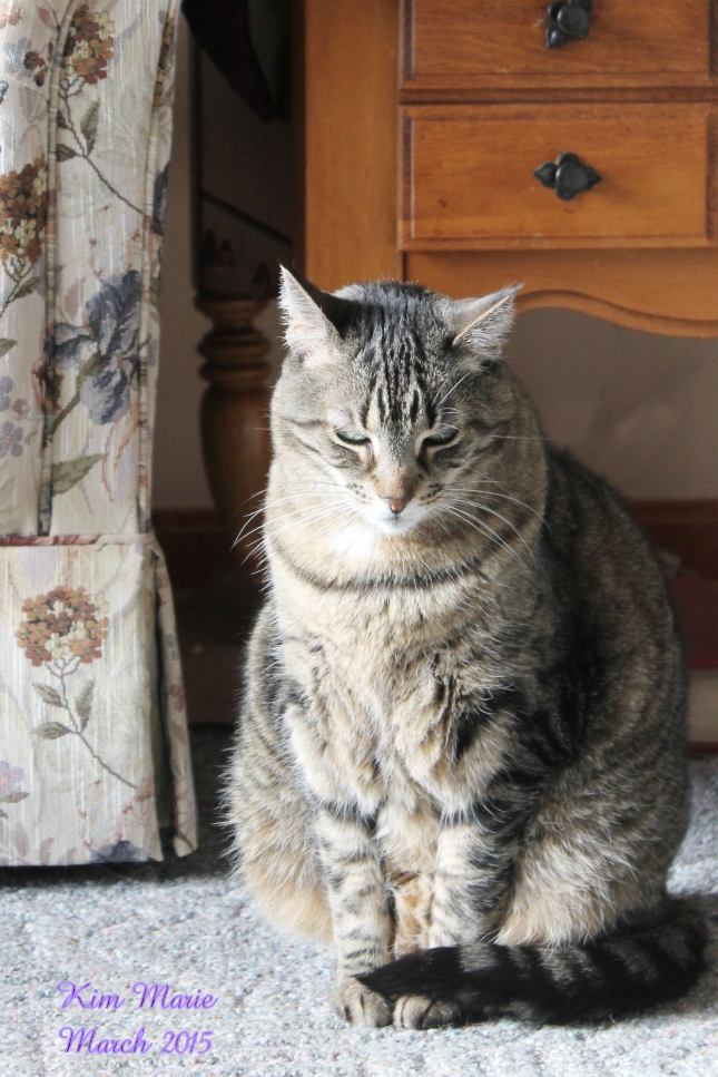 A gray, short-hair tiger cat sitting upright on carpeting with a couch and table behind her.