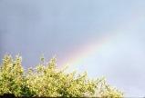 00000572 2001 Rainbow